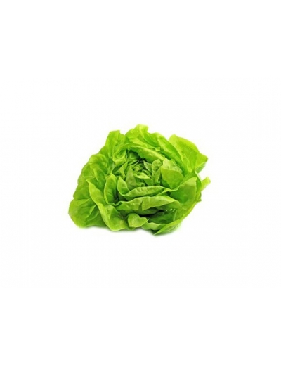 Hlávkový šalát zelený DE kal. 12 1ks
